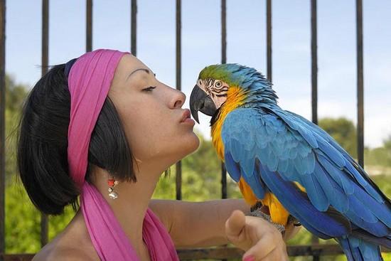 sociable bird